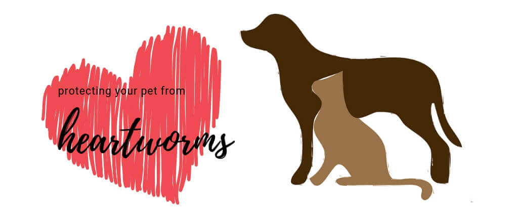 Protecting Your Pet From Heartworms